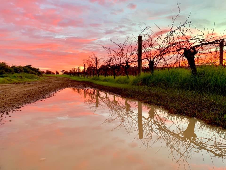 Visit the oldest vineyard in Margaret River