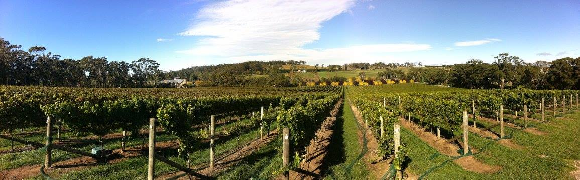 Wine Tasting in the Southern Highlands